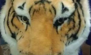 インパクト大!中国の持ち歩く虎の頭の…