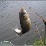 魚釣りにいったお父さんの釣果