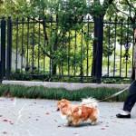 中国の犬の散歩で犬は散歩しません。