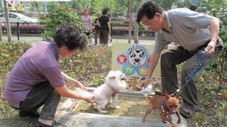 中国の多様すぎるペットの散歩