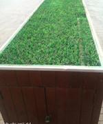 中国の緑化は少し…いや かなり変わってる!
