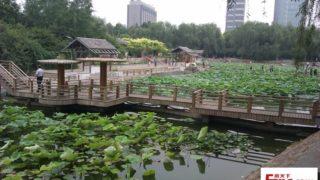 池の蓮が美しい憩いの公園での中国の人々の過ごし方