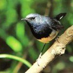 中国人独特の鳥の楽しみ方。