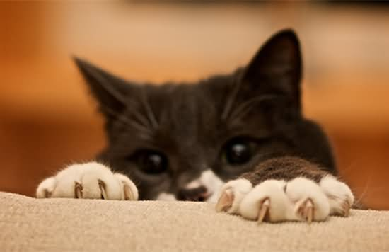 も 猫 たい 借り 手 の
