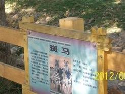 dongwuyuanC