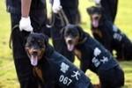 中国の警察犬に採用される犬種は主にシェパード?