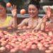 日本の流行を取り入れた中国の温泉のフルーツ浴